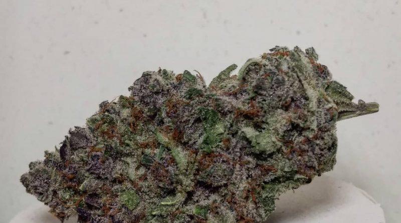 purple zkittlez by rosebud growers strain review by pdxstoneman 2
