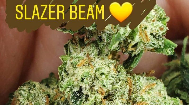 slazerbeam by colorado seed inc strain review by _scarletts_strains_
