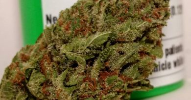 we not me by core gardens strain review by pdxstoneman 2