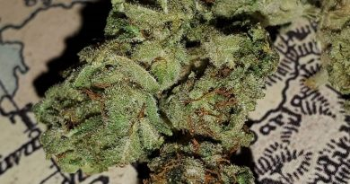 afgan kush by world of seeds bank strain review by _scarletts_strains_ 2