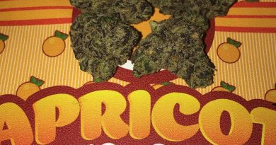 apricot gelato by backpack boyz strain review by boofbusters420
