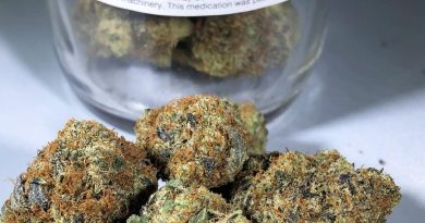 berner's cookies by dc pharm strain review by budfinderdc 2