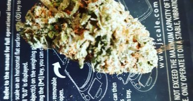 black water kush strain review by hippie_budz