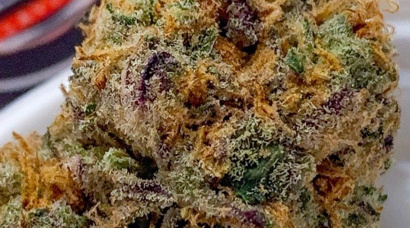 blue italian cookies by georgetown flavors strain review by budfinderdc