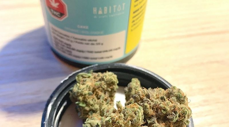 cake by habitat strain review by brandiisbaked