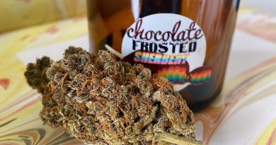 chocolate frosted sherbert by honest genetics strain review by upinsmokesession
