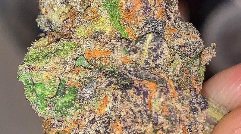 dolato by true genetics strain review by budfinder