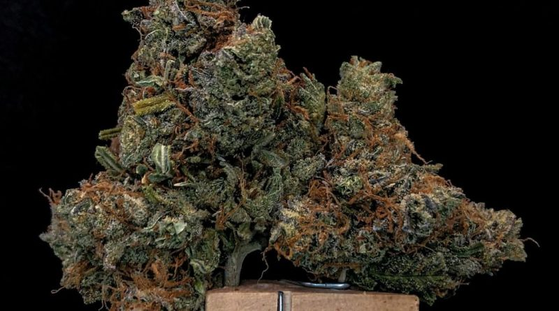 four star general by fire bros strain review by cannabisseur604