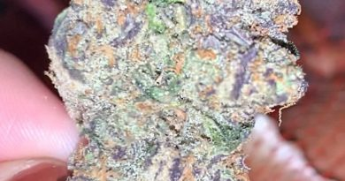 garlic grove by next green wave strain review by anna.smokes.canna