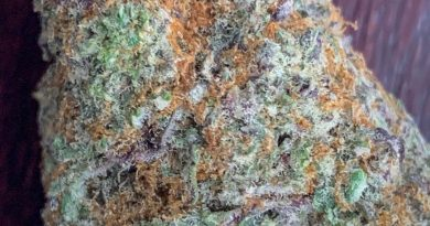 gelato 41 by georgetown flavors strain review by budfinderdc