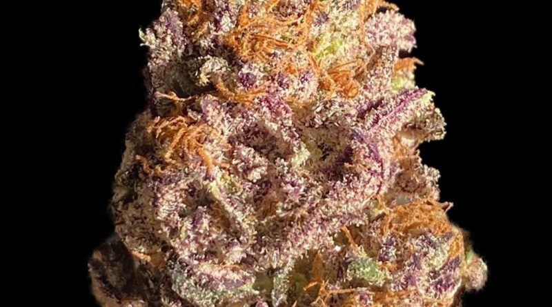 gorilla nut by emerald fire meds strain review by okcannacritic
