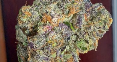 gucci og by georgetown flavors strain review by budfinderdc 2