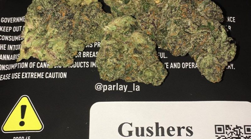 gushers by parlay strain review by boofbusters420