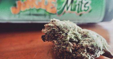 jungle mints by jungle boys strain review by the_originalcannaseur