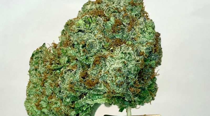 kushberry by dna genetics strain review by cannabsisseur604