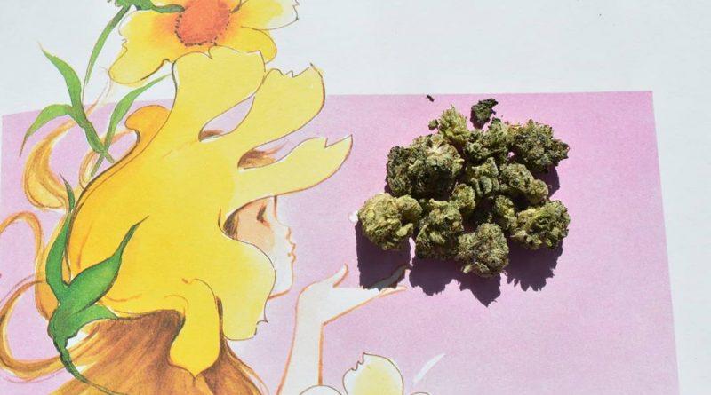 lavender jones aka purple jones strain review by _scarletts_strains_ 2