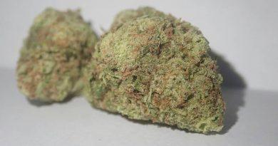 mac mintz by volcanic organics strain review by the_originalcannaseur