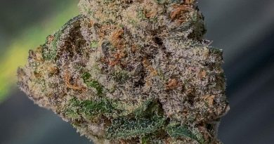 maqui by maqui strain review by budfinderdc