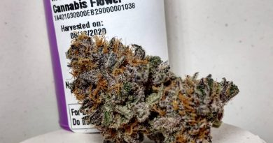 mendo ultraviolet by high noon cultivation strain review by pdxstoneman