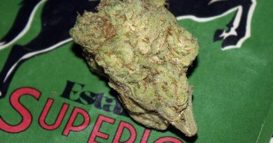 mimosa by estante superior strain review by bigwhiteash