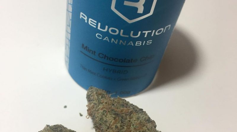 mint chocolate chip by revolution cannabis strain review by fullspectrumconnoisseur