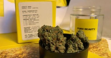 napali pink by pure beauty strain review by anna.smokes.canna