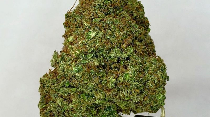 nuken by cash crop ken strain review by cannabisseur604