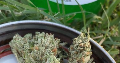 og-18 by pintail gardens strain review by slumpysmokes