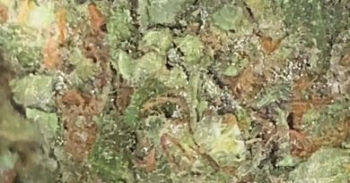 outer sunset by chronic creek strain review by trunorcal420 3