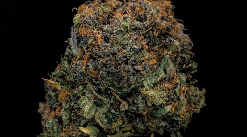 pink gas strain review by cannabisseur604