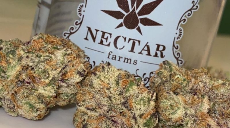 plum driver by nectar farms strain review by slumpysmokes