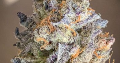 purple punch from district florist strain review by budfinderdc