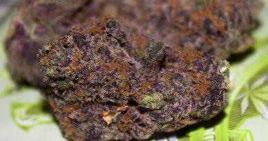 raspberry cheesecake by indoor organic gardens strain review by bigwhiteash