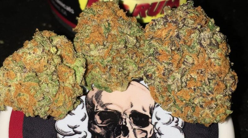 red rum by cannatique farms strain review by boofbusters420