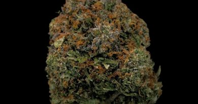 rock bubba strain review by cannabisseur604