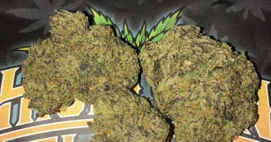 sherbanger #22 by norcals gardens strain review by boofbusters420