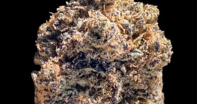 sherbert punch by eclipse pharms strain review by okcannacritic