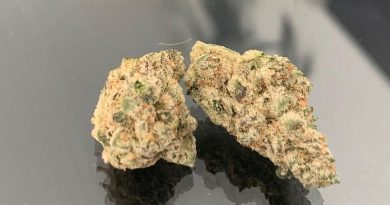 space cake by bodhi seeds strain review by the_originalcannaseur