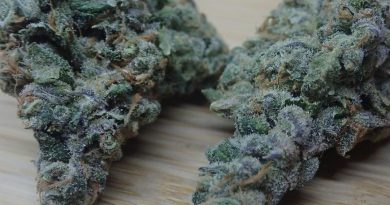 sunset mints by seed junky genetics strain review by the_originalcannaseur