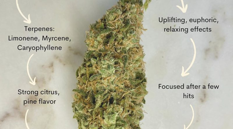tangerine dream by barney's farm strain review by upinsmokesession