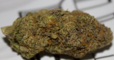 the naughty one by the tenco strain review by bigwhiteash