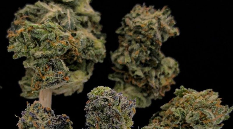 the one by clackamas coots strain review by cannabisseur604