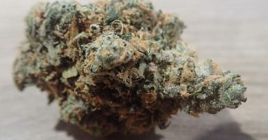 triangle kush from the cali club tenerife strain review by the_originalcannaseur