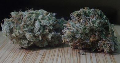 tropicanna cookies f2 by oni seeds co strain review by the_originalcannaseur