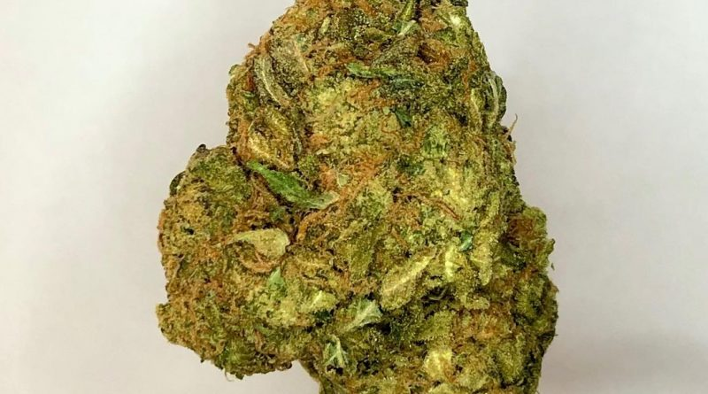 white castle by nirvana seeds strain review by cannbisseur604