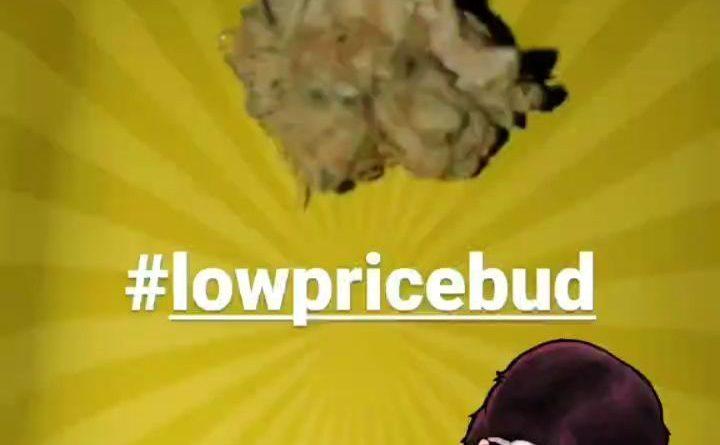 white haze by low price bud strain review by hippie_budz
