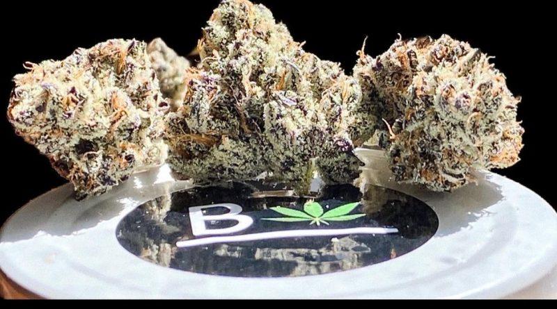 white truffle by beleaf cannabis strain review by okcannacritic 2