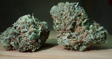 z3 by terp hogz strain review by the_originalcannaseur