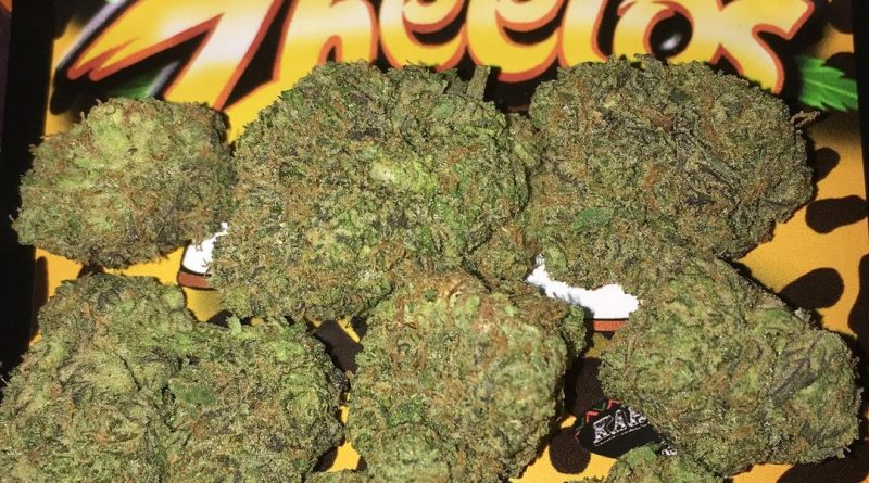 zheetos by big buddha seeds strain review by boofbusters420