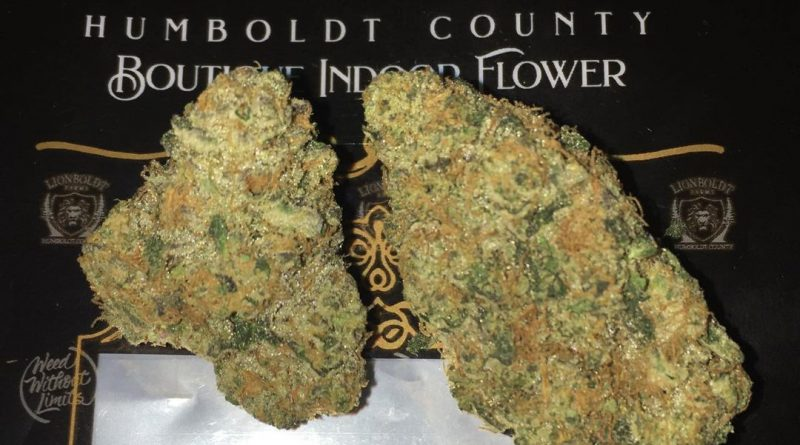biscotti cake lion's cut by lionboldt farms strain review by boofbusters420